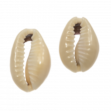 Kauri Schelpjes (20 - 26 mm) Dark Khaki (25 gram / ca. 20 stuks)