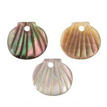 Schelp Bedel (9.5 - 10.5 x 10 - 11 x 2 - 3 mm) Black Lip Shell (3 Stuks)