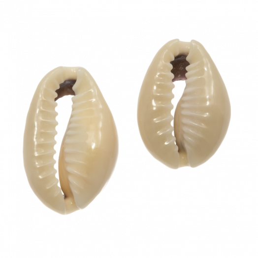 Kauri Schelp Kralen (13 - 20 mm) Dark Khaki (65 Stuks)