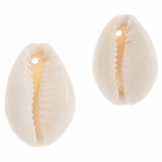 Kauri Schelp Kralen (15 - 23 mm) Seashell (55 Stuks)